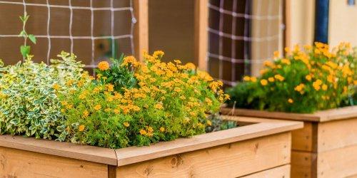 Záhony na pestovanie byliniek