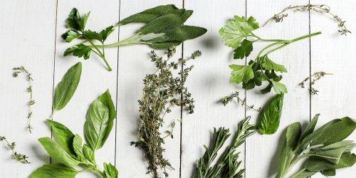 Semená bylinky
